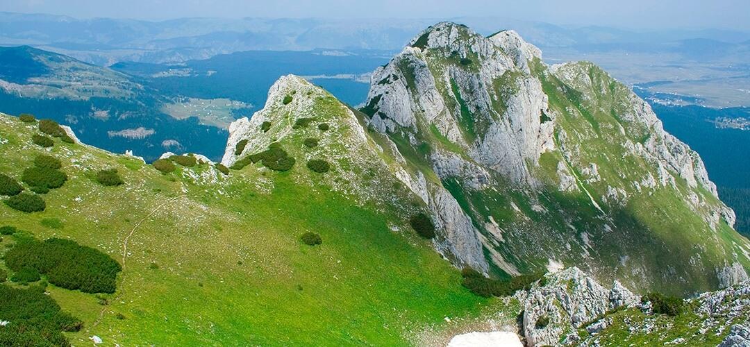 planina lekovito bilje taraderm